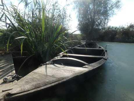 Escute, belle barque flamande en bois de chêne