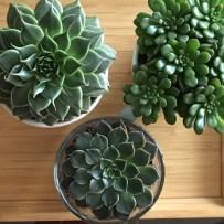Mes petites plantes grasses