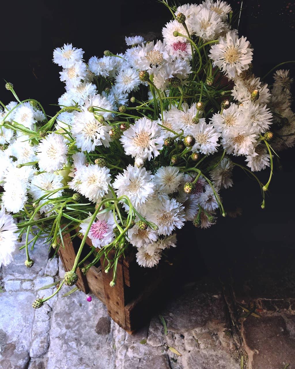 lieu-reception-champetre-caisse-fleurie-printemps-mariage