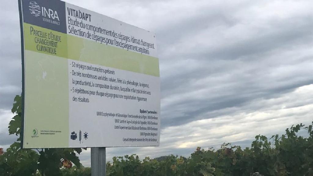 Le Bordeaux veut gérer le changement climatique en tournant la page de la chimie