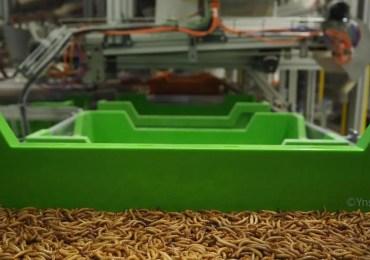La championne mondiale de l'élevage d'insecte est  une start-up française