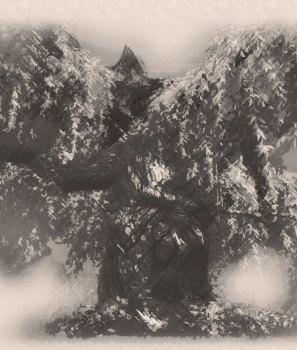 Les Mystères de la Vieille Forêt