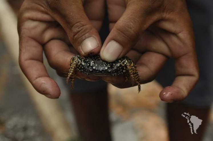 Encore un crabe, il y a plus de 7 espèces différentes dans le coin, celui ci est poilu