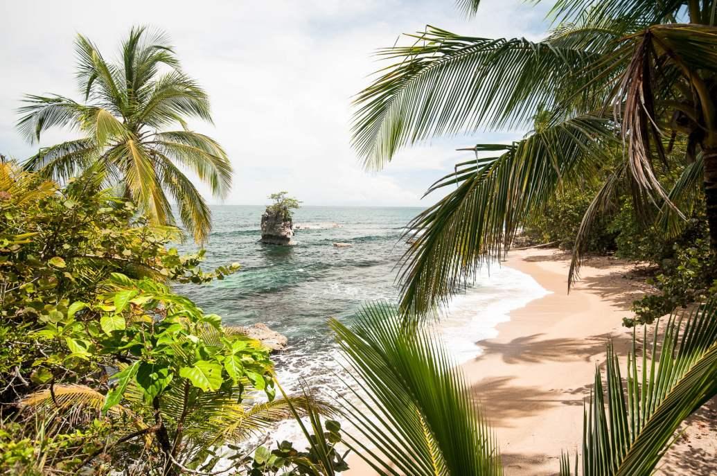 palmiers manzanillo