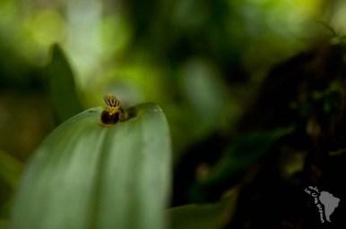 Minuscule orchidée
