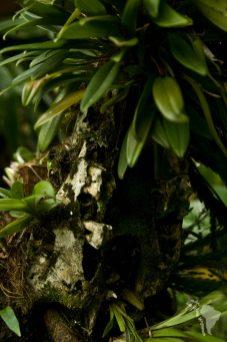 Support pour la culture d'orchidée