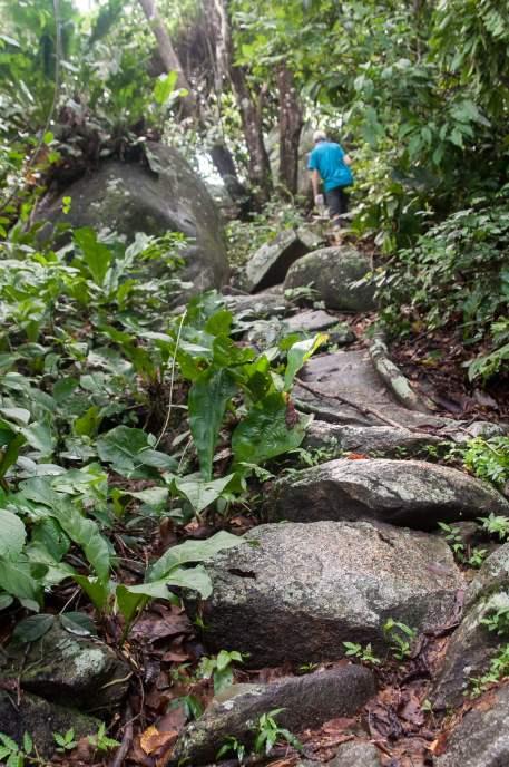 chemin cailloux sentier rando tayrona
