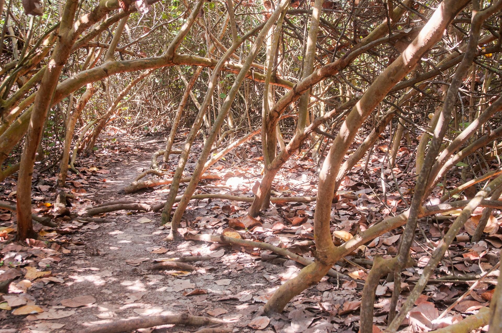 tayrona forêt