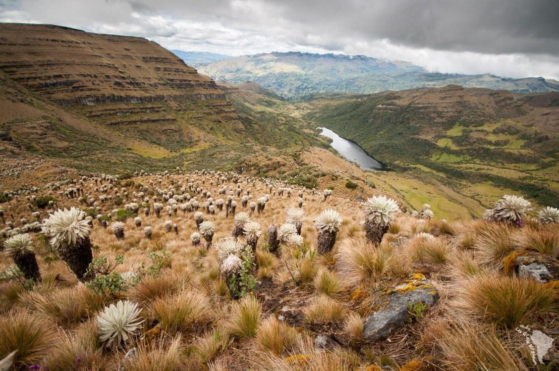 Vue ultime de la balade sur le paramo d'oceta près de Mongui
