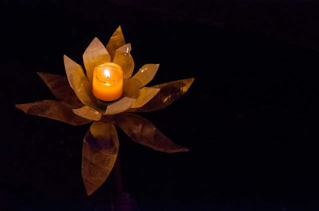 salento-lumière-fleur