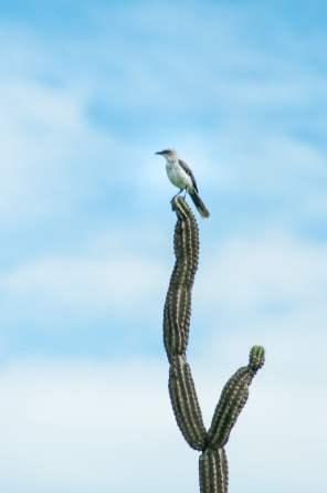 tatacoa oiseau-2