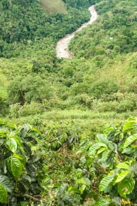 plantation café san agustin colombie