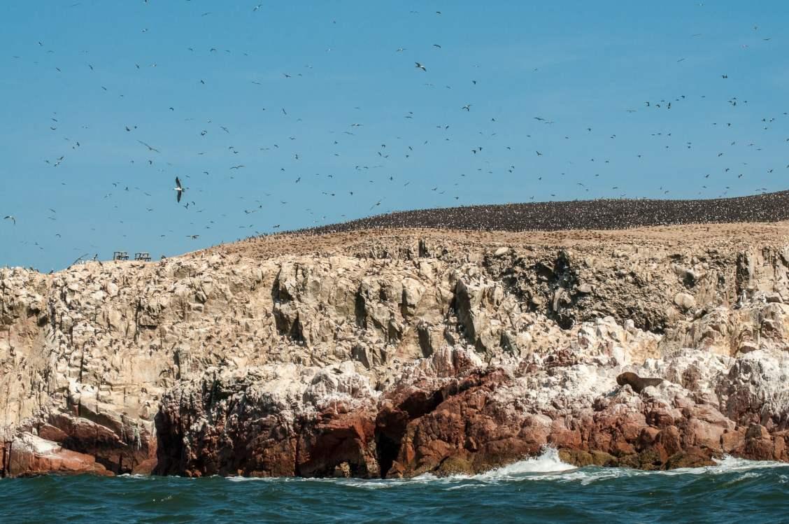 paracas colonie oiseaux rocher
