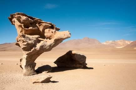arbre pierre désert