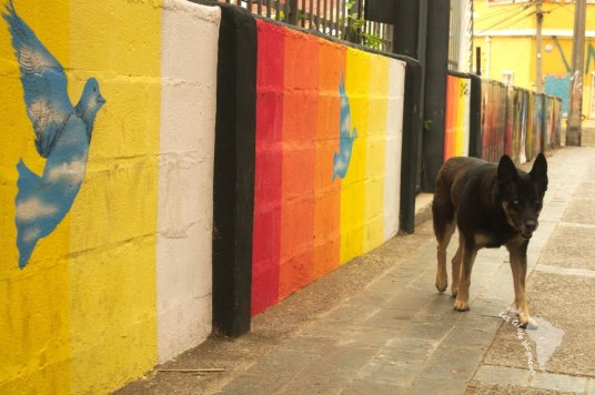 Valparaiso - chien errant