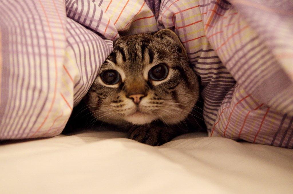 couette chat congé sabbatique