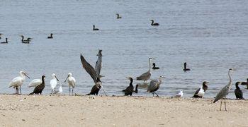 oiseaux marin douro