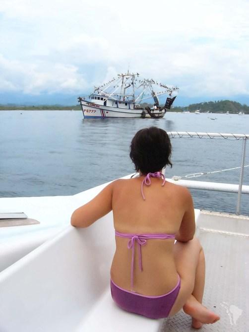 pélicans bateau costa rica