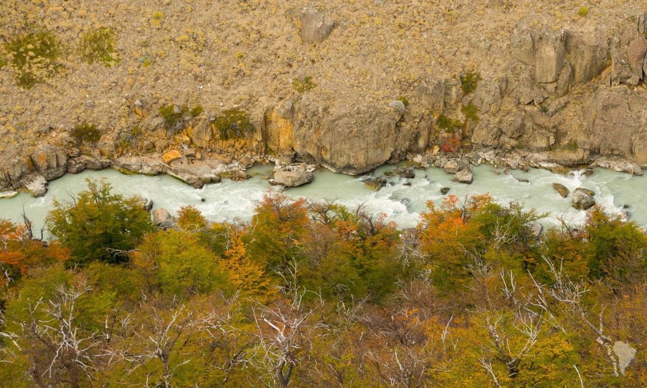 rivière patagonie forêt