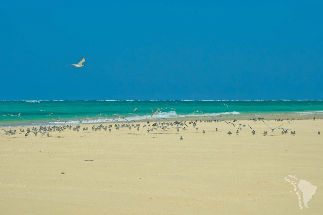 oiseau réserve marine tanzanie