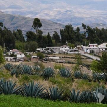 village agave équateur