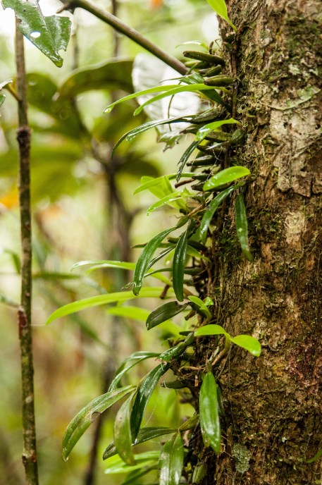 végétation ranomafana