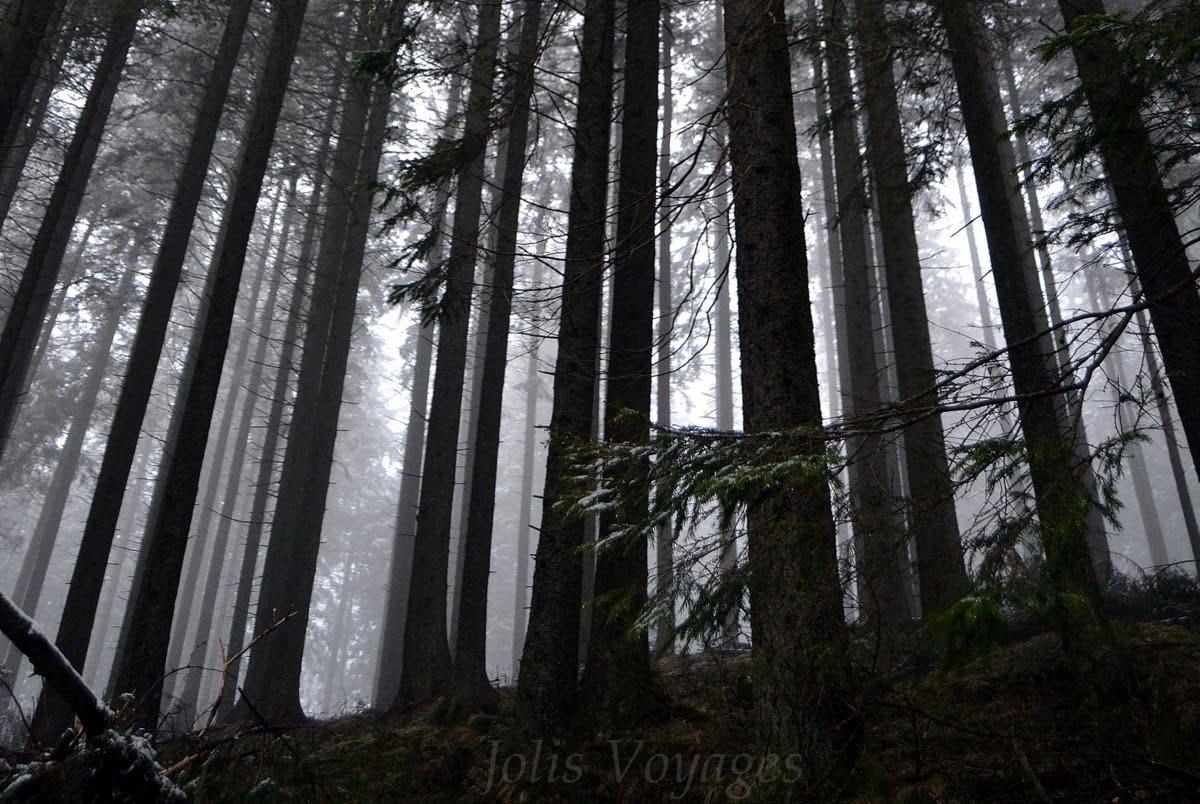 forêt carpates parc national tatras pologne