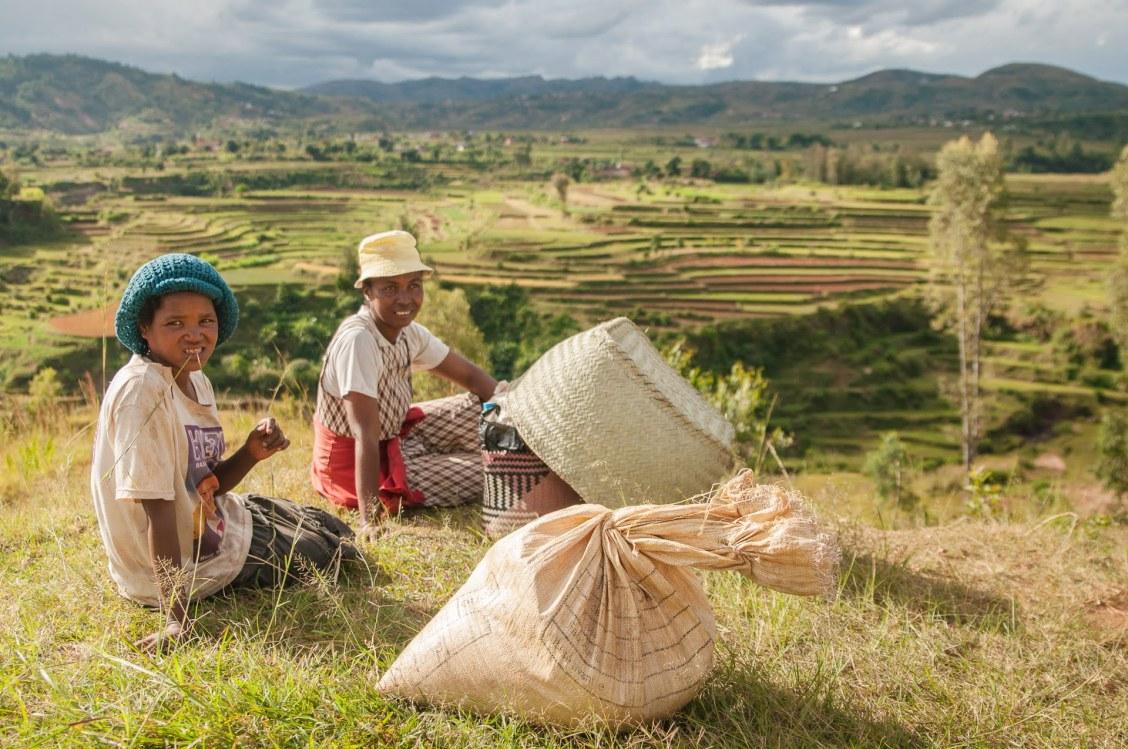 femme-recolte-riz-betafo_