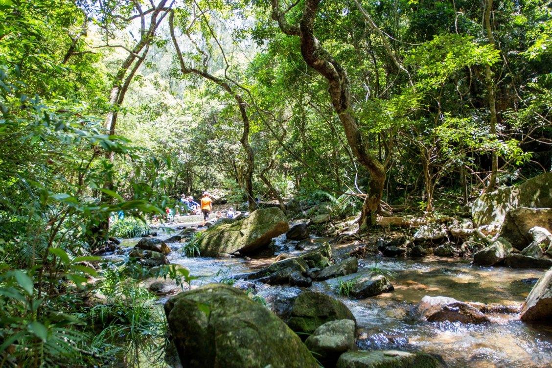 réserve naturelle de tai po kau hong kong