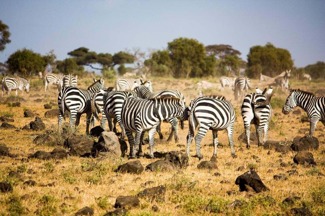Les plus beaux paysages d'Afrique - parc national d'amboseli au Kenya