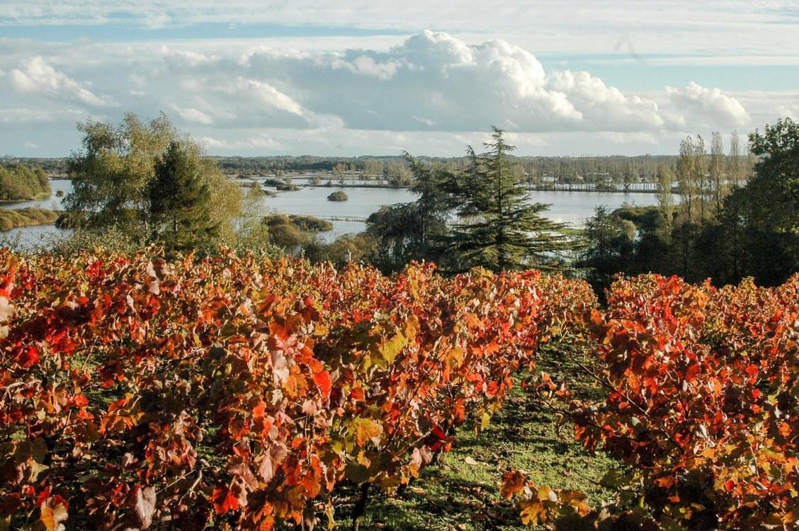 marais-goulaine-chemin-vigne