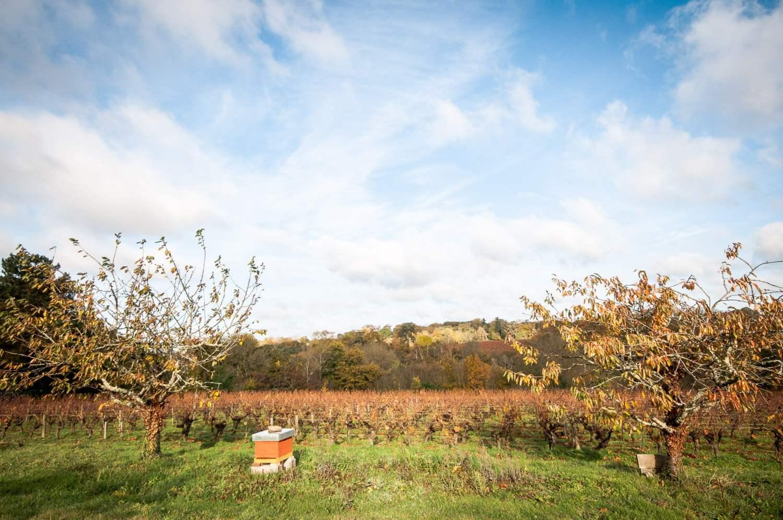 automne 3 versants