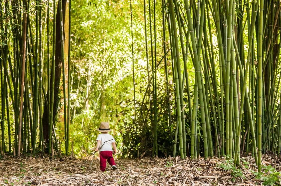 Bambous du parc de la Gaudinière à Nantes