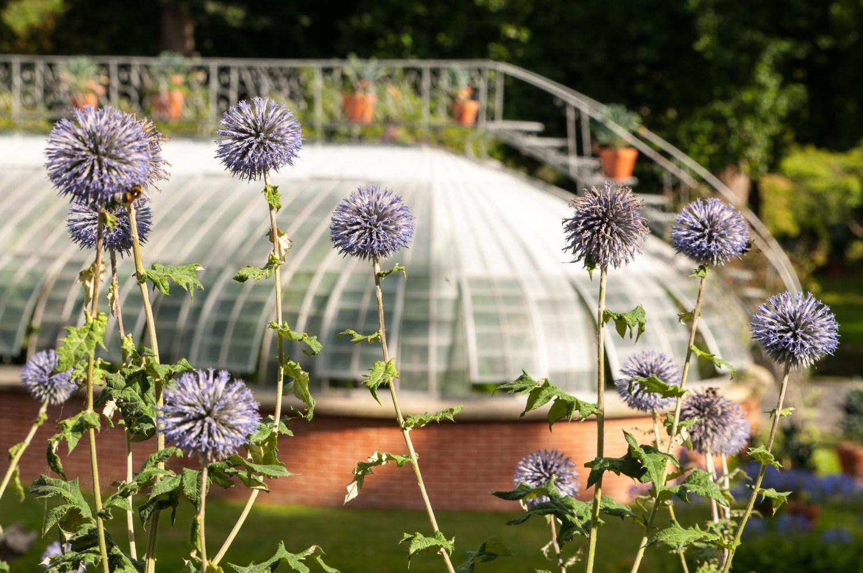 Serre du jardin des plantes à Nantes