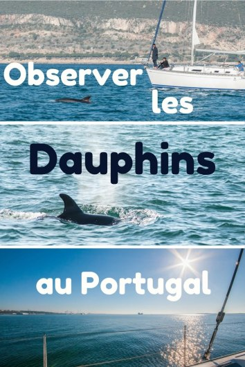 couv dauphins1