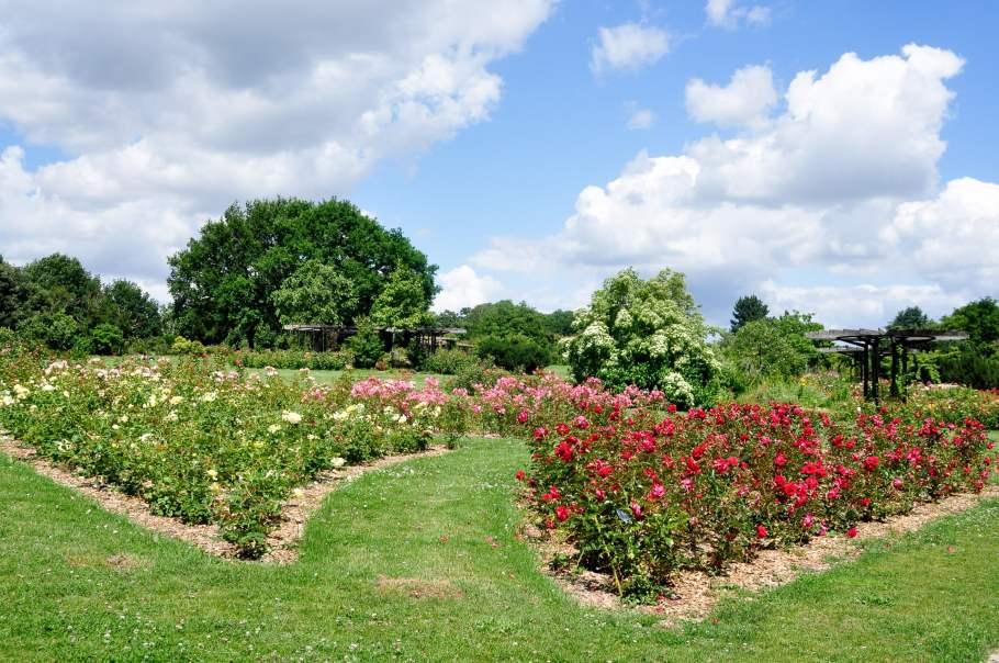 Roseraie du parc de la Beaujoire à Nantes