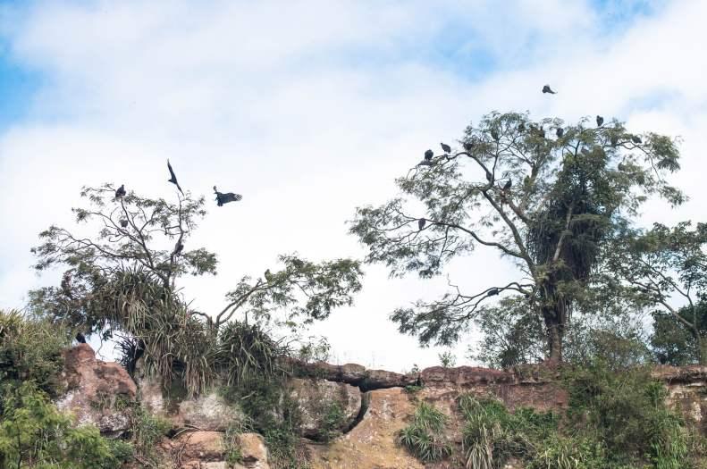 Le territoire des vautours. Parc national des chutes d'Iguazu