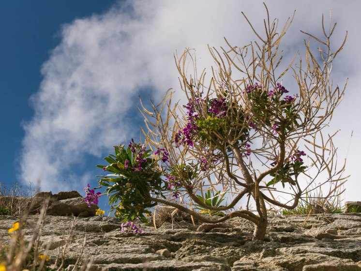 Fort lalatte arbuste mur