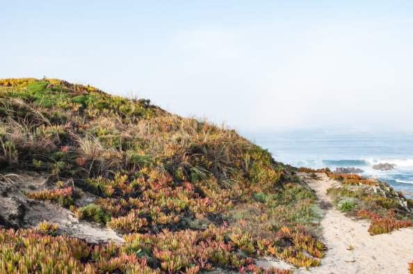 almogarve chemin vegetation