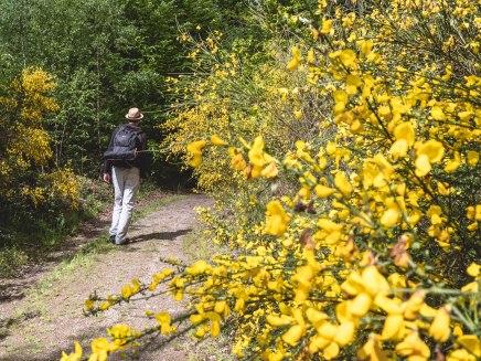 Laforet fleurs jaunes