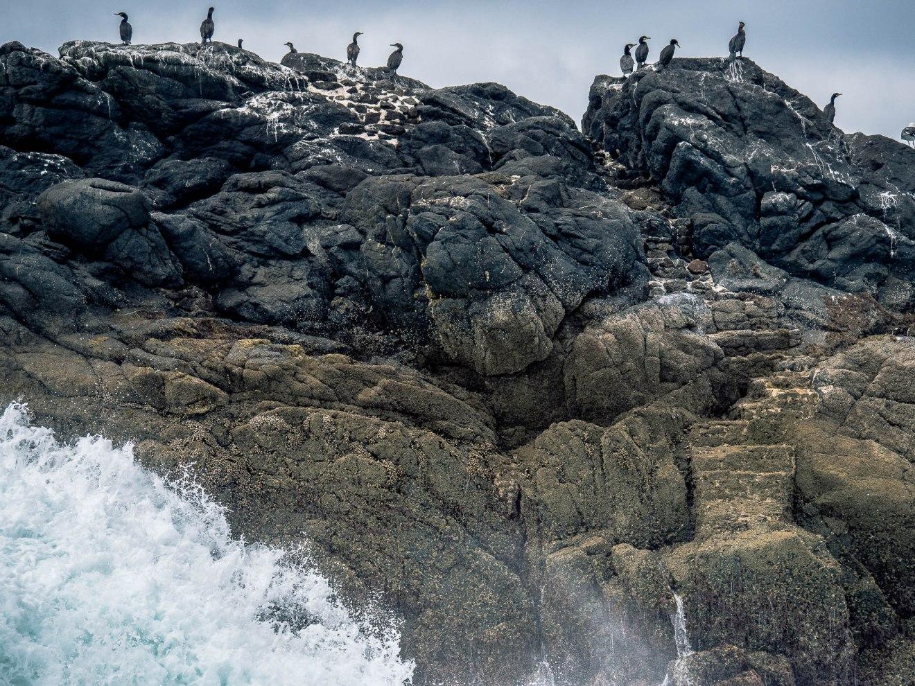 conquet cormorans rocher phare iroise