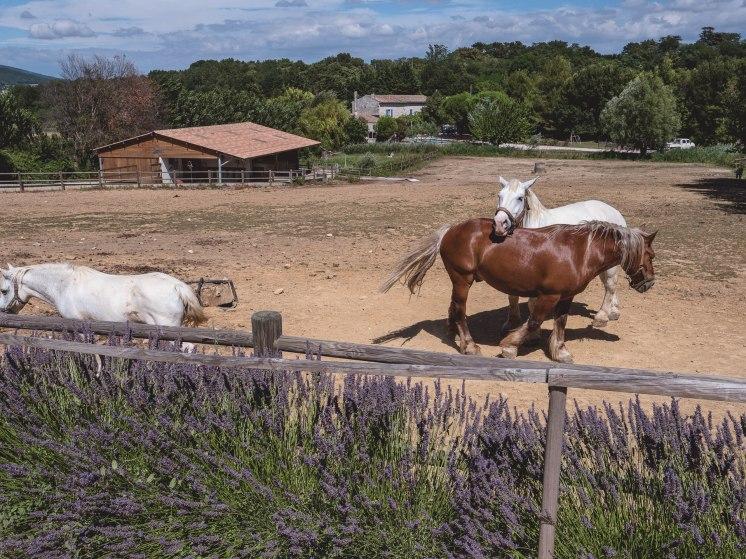 drôme savasse chevaux bis