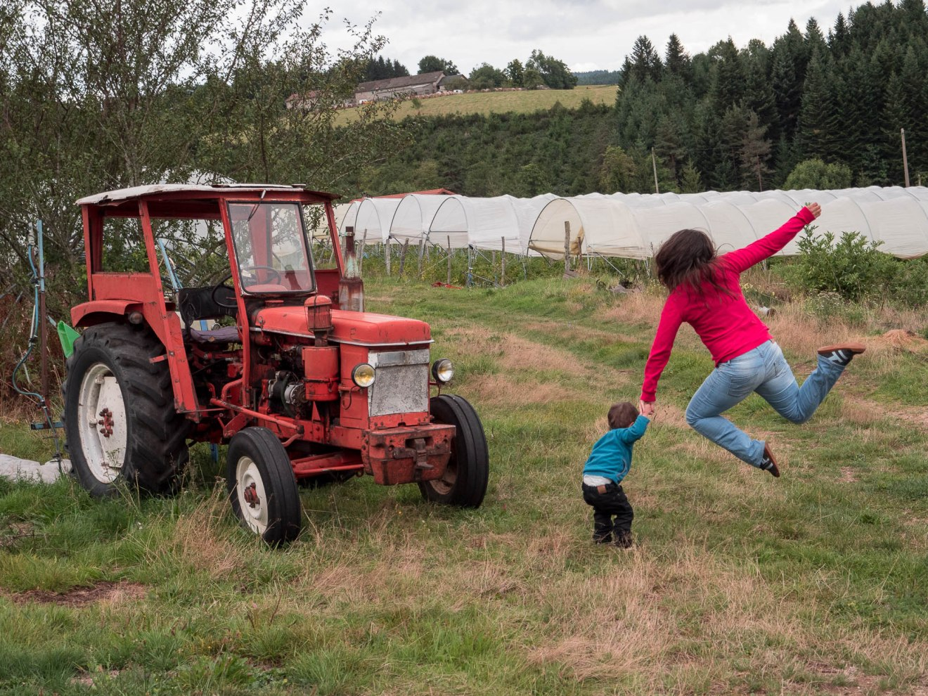 Exploitation de fruits rouge en Haute Loire - rouge framboise
