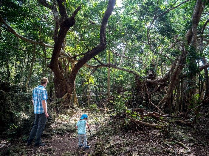 parc forestier kending SH