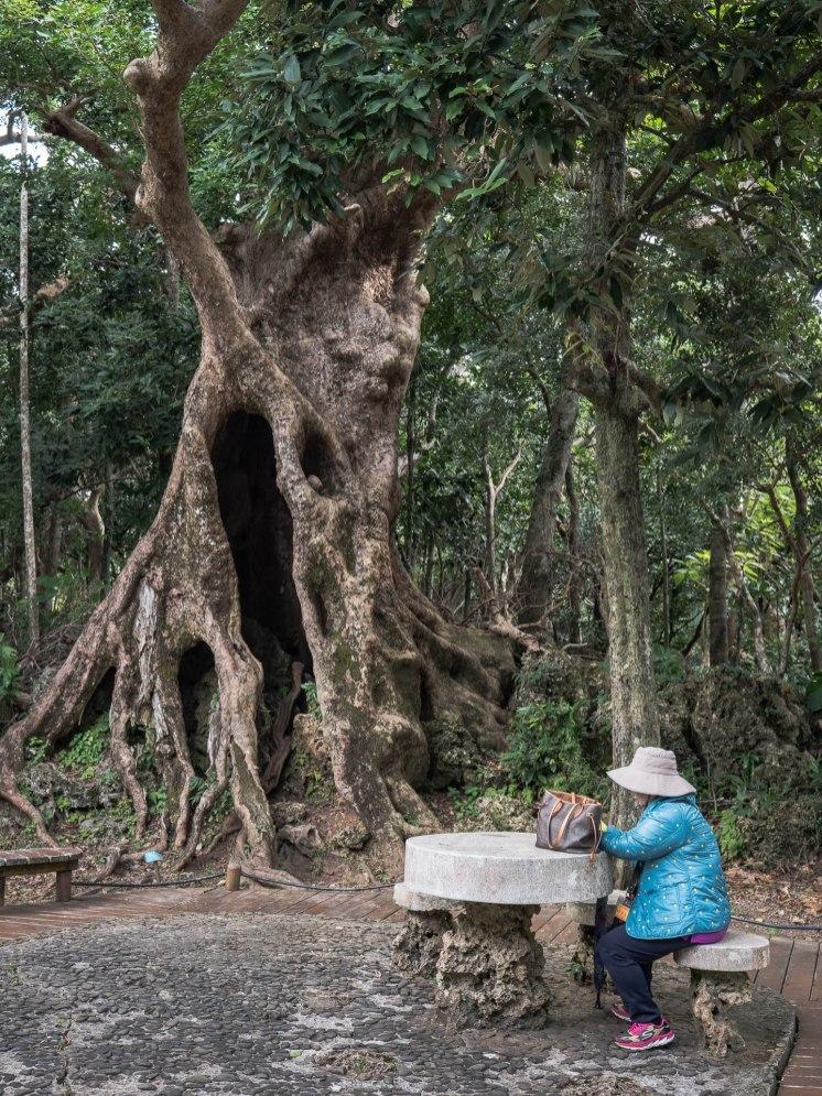 parc forestier kending arbre dame
