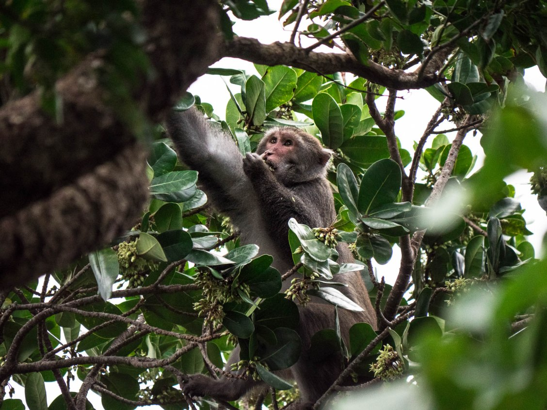 parc forestier kending macaque