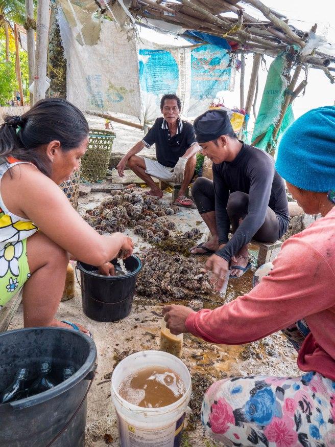 oursins siquijor philippines
