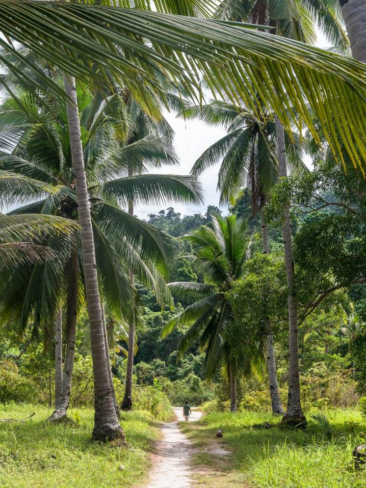 Port barton cascade palmiers