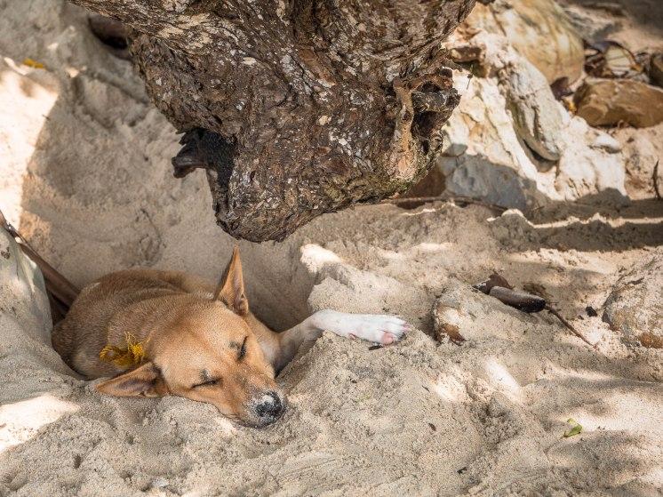 Port barton chien arbre bis