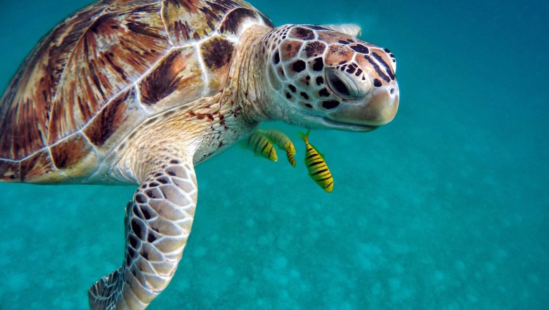 itinéraire aux Philippines spécial plage, plongée et snorkeling